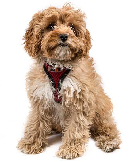 Best Dog Food For A Beagle Uk
